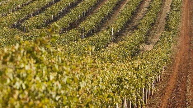 Đất của vùng rượu vang Bendigo chủ yếu là đất nâu vàng bao gồm đất sét, cát và một số thành phần hữu cơ khác.
