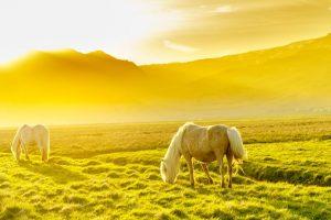 Những bức ảnh ảo tuyệt đẹp về vùng đất Iceland khi đi tour Châu Âu