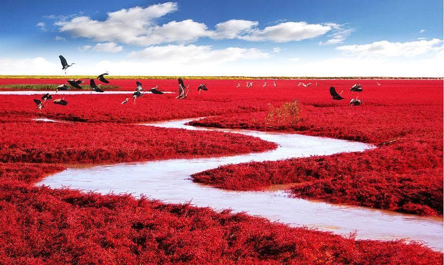 Biển đỏ, Panjin, Trung Quốc
