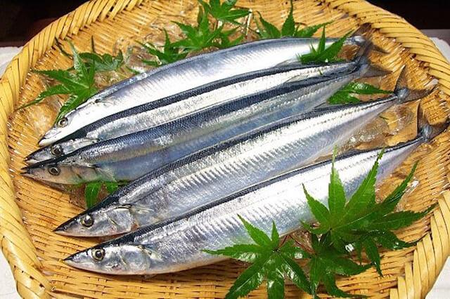 """Cá thu đao còn được người Nhật gọi với cái tên """"thanh kiếm mùa thu"""""""