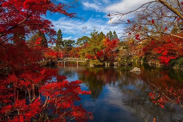 Nhật Bản mùa thu đẹp lãng mạn đến nao lòng với sắc đỏ vàng rực rỡ của những tán cây phong và hạnh ngân