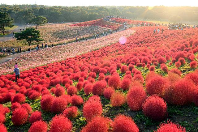 Mùa thu là khoảng thời gian lí tưởng để đi du lịch Nhật Bản trọn gói