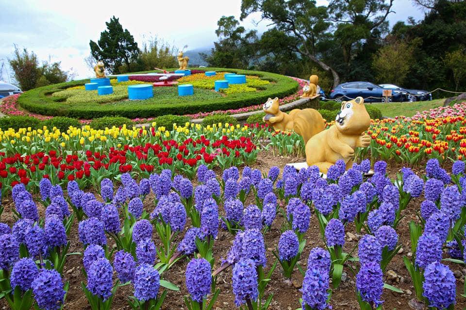 Mùa hoa Yangmingshan đẹp lung linh