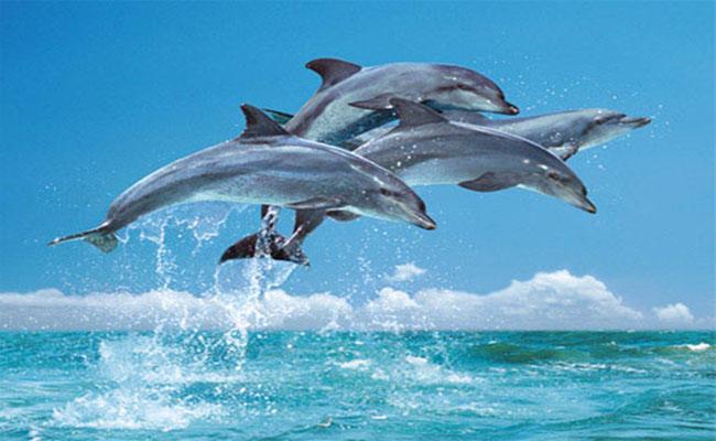 Đi tour Đài Loan để ngắm cá heo Hualien (Hoa Liên)