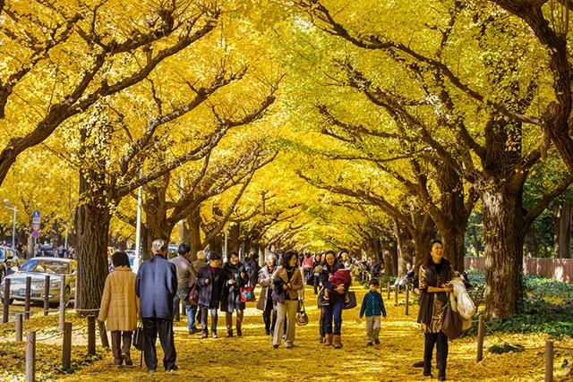 Thời tiết mùa thu Nhật Bản bắt đầu se lạnh và có sự khác biệt giữa các đại hình và khu vực từ Bắc vào Nam