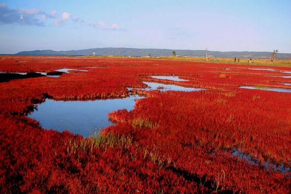 Hồ Komuke