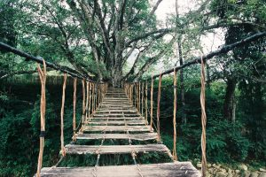 Cầu Mây Sapa – Địa điểm sống ảo của giới trẻ