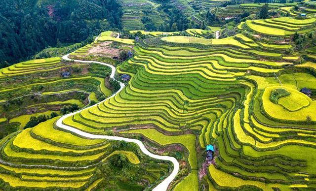 Quý Châu là tỉnh nằm ở Tây Nam Trung Quốc, nơi đây ẩn chứa vô số điều thú vị cả về phong cảnh, thời tiết, con người và văn hóa