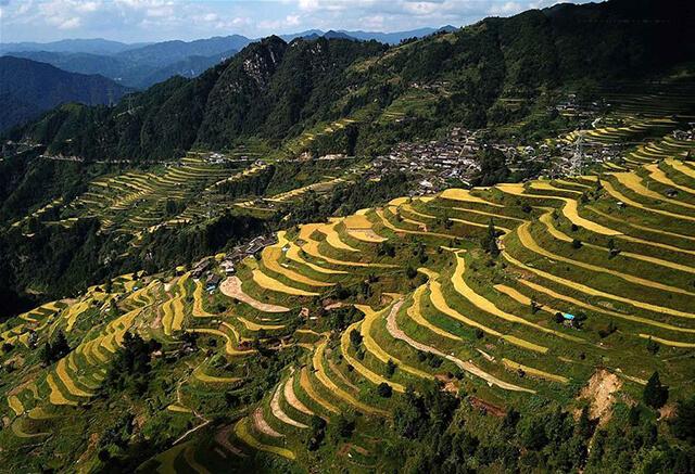 Du lịch Quý Châu mùa thu là dịp để ngắm nhìn những thuở ruộng bậc thang đương độ chín tới, vô cùng lãng mạn, cuốn hút