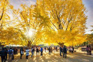 Nhiều trải nghiệm lí thú đang chờ bạn khám phá trong chuyến du lịch Hàn Quốc mùa thu