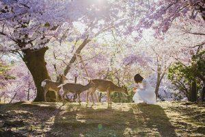 Kinh nghiệm du lịch Nhật Bản mùa hoa anh đào