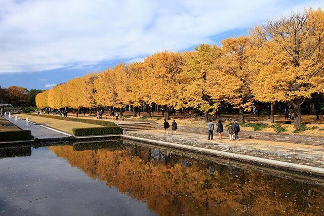 Một góc hồ nước trong công viên Showa Kinen vào mùa thu