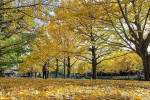 5 điểm tham quan tuyệt đẹp khi du lịch Nhật Bản mùa lá đỏ