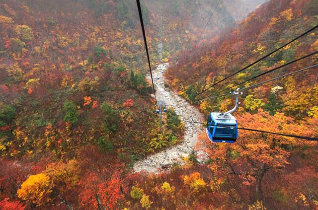 Mùa lá đỏ Momiji ở Nhật Bản diễn ra từ tháng 9 đến tháng 11
