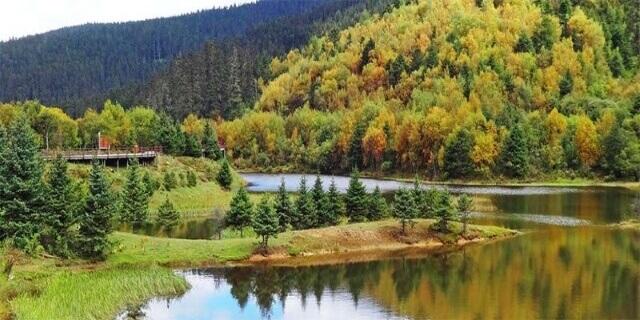 Pudacuo với tài nguyên rừng phong phú và đa dạng các loại cây quý hiếm.