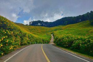 Khám phá vùng Mae Hong Son và check in cảnh đẹp hoa dã quỳ