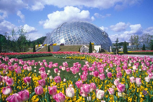 Công viên hoa Tottori Hanakairo rực rỡ đủ loại sắc màu có vô số góc sống ảo