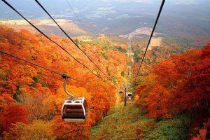 Khám phá phong cảnh mùa thu khi đi du lịch Nhật Bản tháng 11