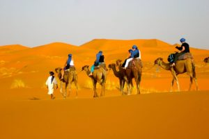 SAFARI DUBAI – KHU BẢO TỒN SA MẠC KỲ BÍ