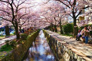 5 địa điểm không thể bỏ qua trong tour Nhật Bản ngắm hoa anh đào 2020