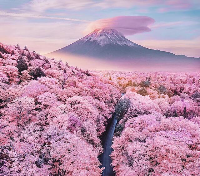 Đi tour Nhật Bản ngắm hoa anh đào 2020 không thể không ghé núi Phú Sĩ
