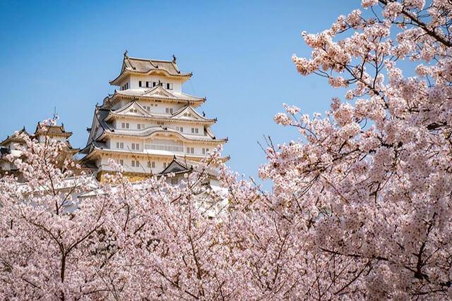 Bức tranh phong cảnh đẹp không góc chết tại lâu đài Hemeji mùa hoa anh đào nở