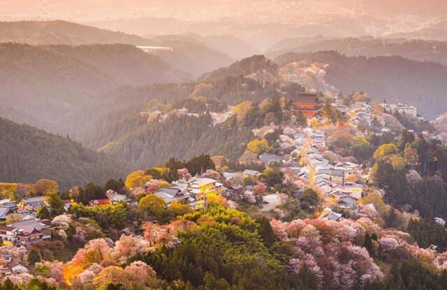 Ngọn núi Yoshino, Nhật Bản là nơi trồng hơn 5000 gốc anh đào