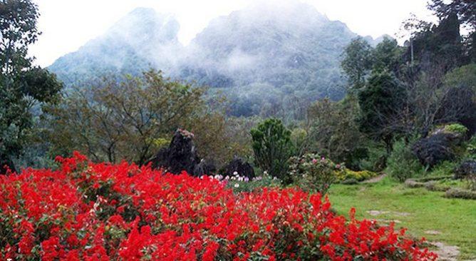 Thung lũng Hoa Hồng Sapa