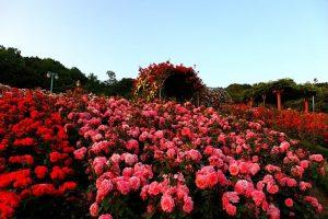 Du lịch Sapa khám phá thung lũng Hoa Hồng