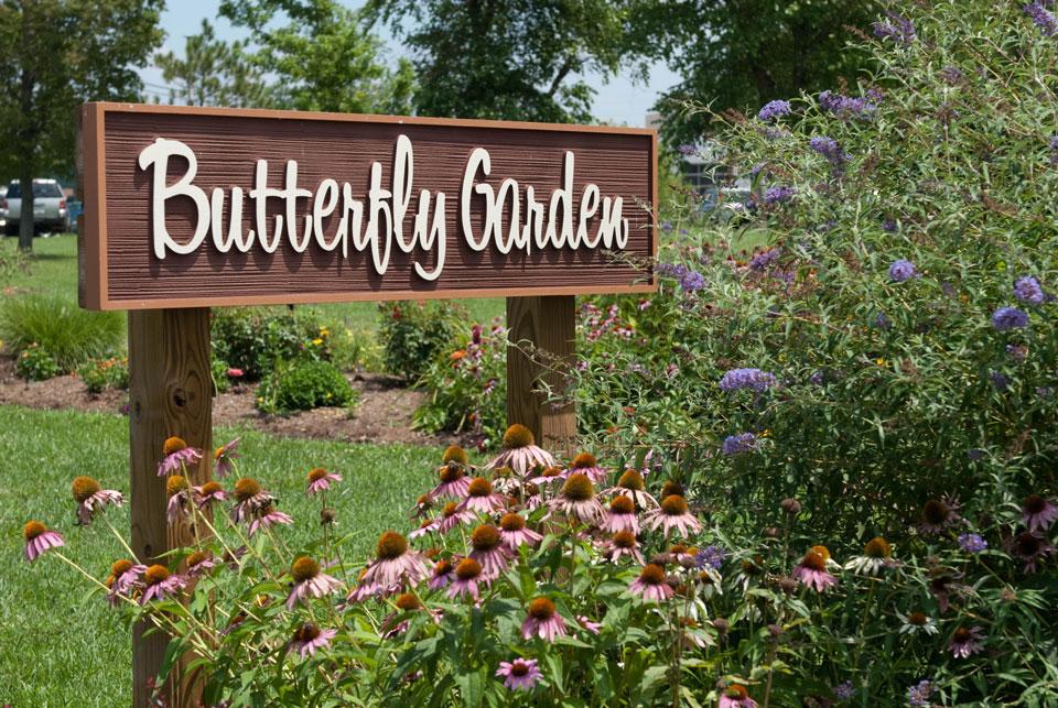 vườn bướm Butterfly Thái Lan