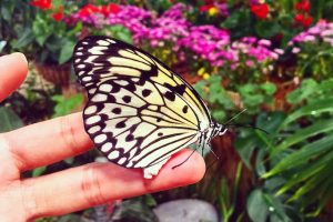 Chiêm ngưỡng vẻ đẹp của vườn bướm Butterfly Thái Lan