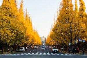 Mùa thu Nhật Bản đẹp nhất qua 10 điểm tham quan này!