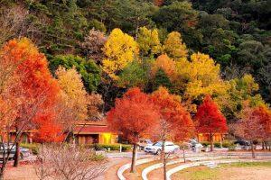 Đi du lịch Đài Loan tháng 11 có gì thú vị?
