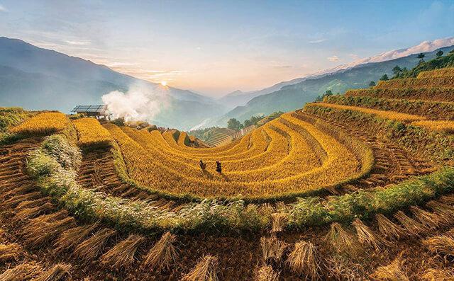 Nếu thích ngắm lúa chín thì bạn nên du lịch Sapa từ đầu tháng 9