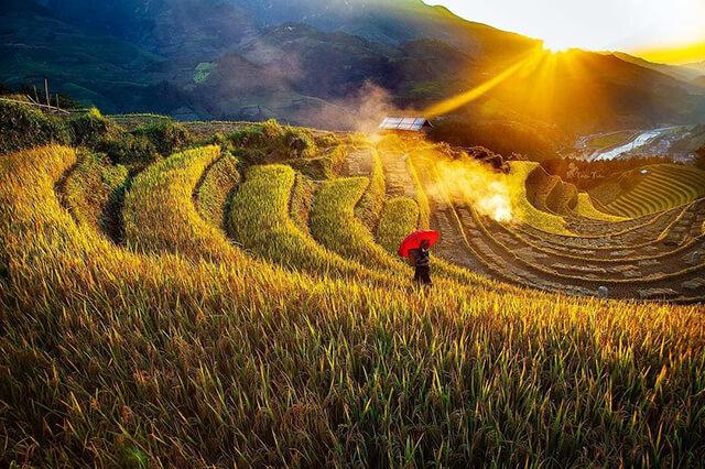 Sapa mùa lúa chín đẹp mê li say, đắm lòng người