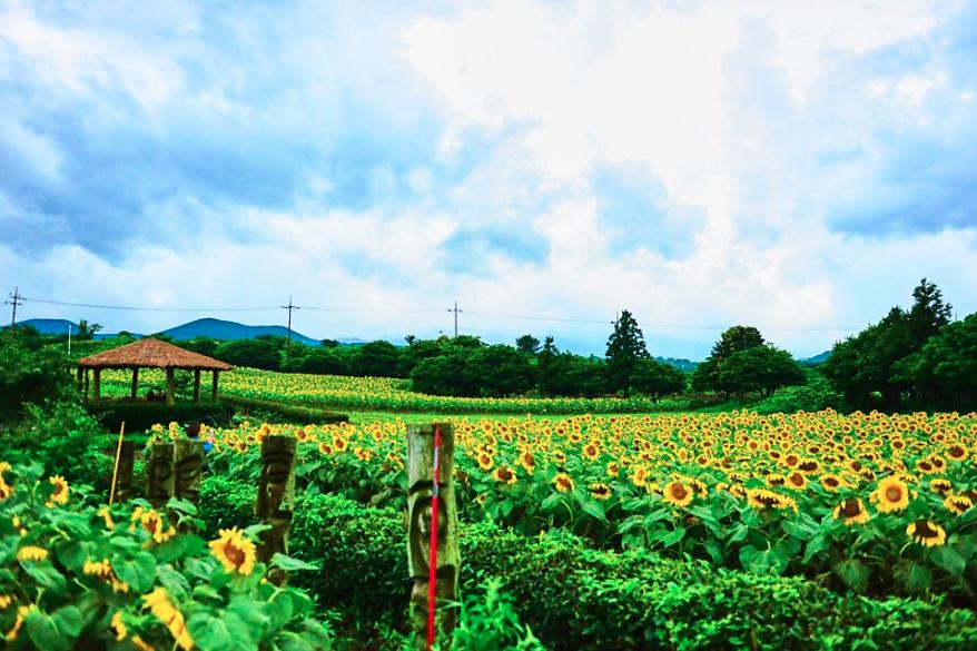 Khám phá nông trại Kyung Suk