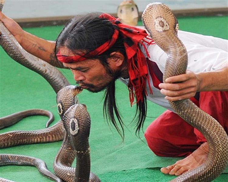 Trại rắn Hoàng Gia Thái Lan