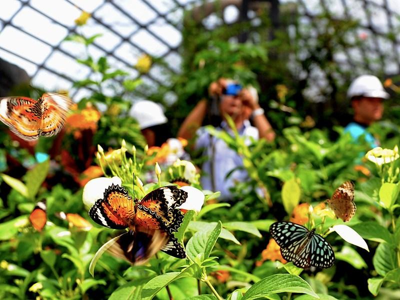 Vườn bướm Butterfly Garden