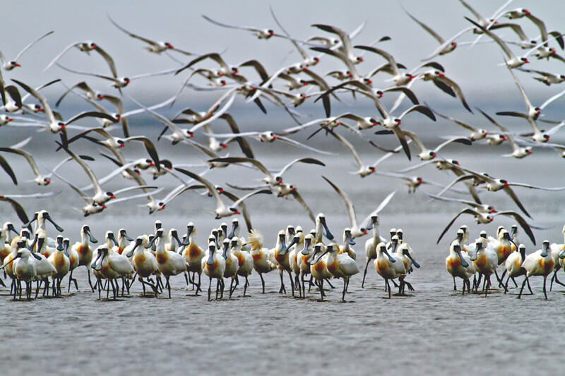 Khu bảo tồn các loài Cò Đài Nam
