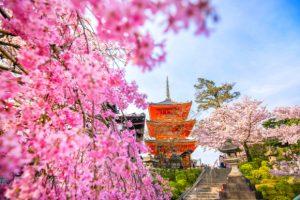 Du lịch Nhật Bản mùa hoa anh đào nở có gì thú vị?