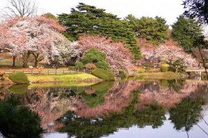 Giới thiệu về thủ đô Tokyo khi đi du lịch Nhật Bản???