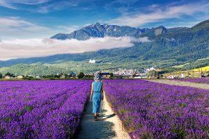 5 điều nên làm khi đi tour du lịch Nhật Bản tháng 7