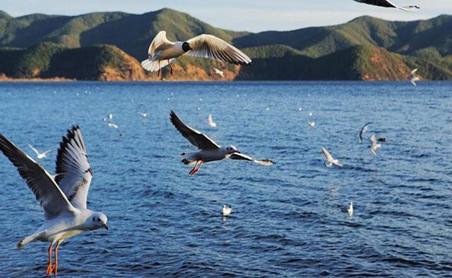 Đến hồ Lư Cô nhất định phải đi thuyền và ngắm chim hải âu