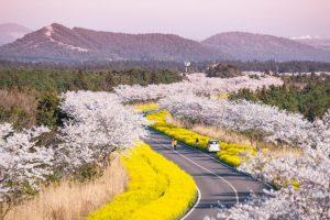 """""""Quên lối về"""" với những lễ hội đặc sắc tại đảo Jeju Hàn Quốc!"""