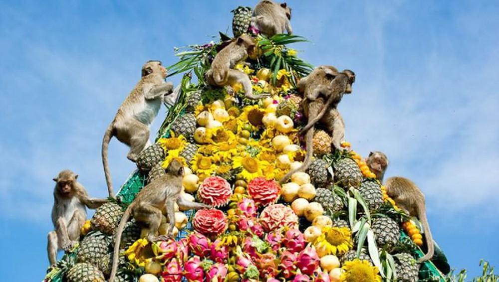hội tiệc buffet cho khỉ