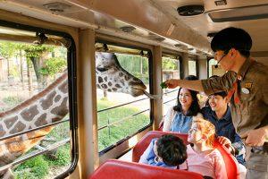 Kinh nghiệm du lịch Hàn Quốc vui chơi tại công viên Everland!