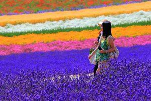 Lung linh sắc hoa Oải Hương Lavender tại Hokkaido, Nhật Bản