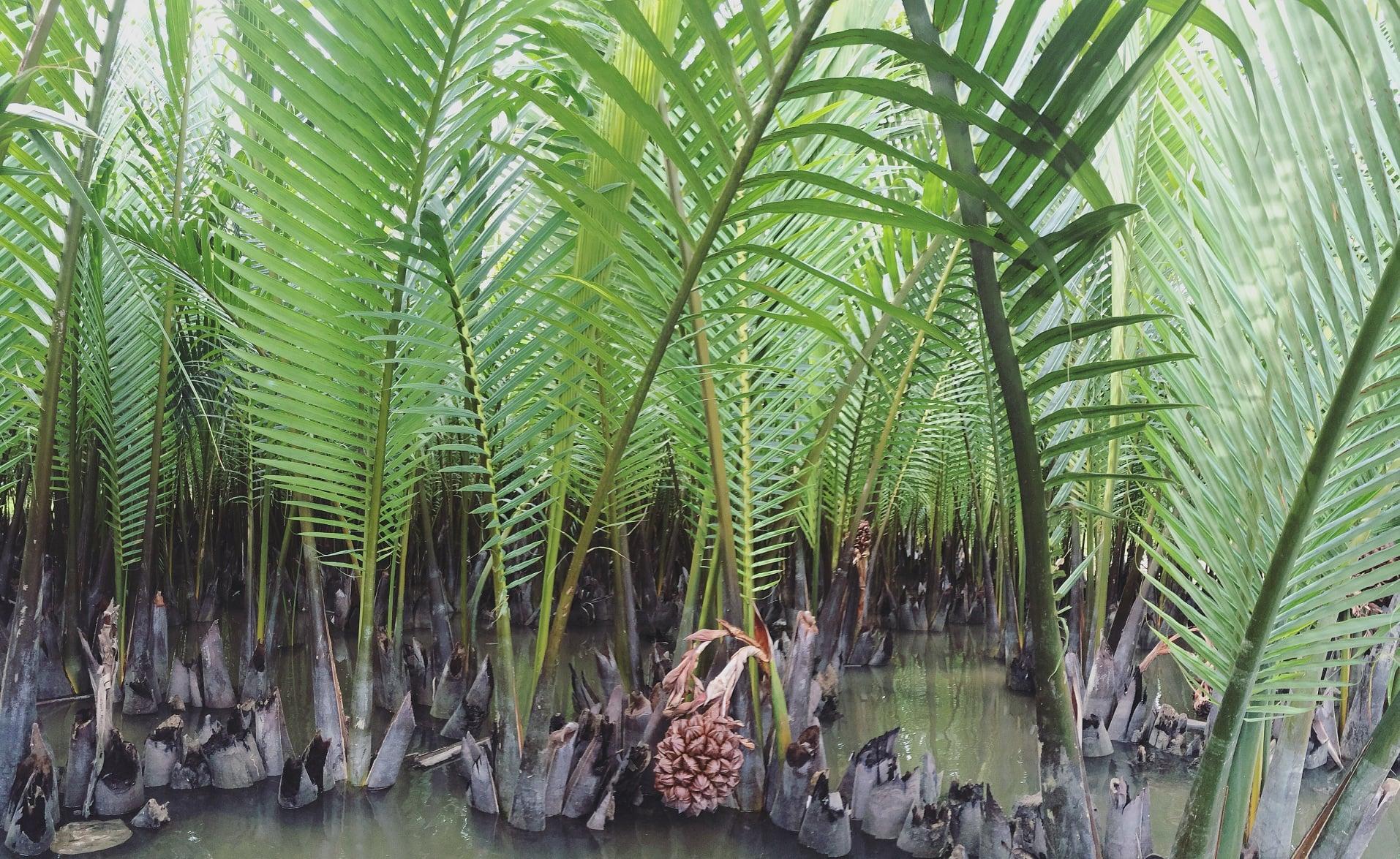 rừng dừa Bảy Mẫu