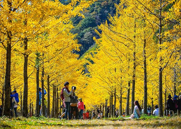 Vẻ đẹp Hàn Quốc vào mùa thu