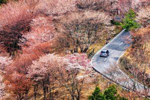 Kinh nghiệm du lịch Nhật Bản vào mùa hoa anh đào!